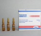 Enantato de Testosterona Norma 250mg/amp